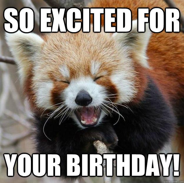 4554760953f7d894ab035f8e9a5e8921581074e20cb8b3d5ccdf4fcfb3f28771 so excited for your birthday! red panda quickmeme