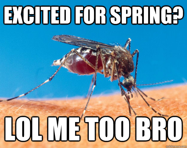 excited for spring? lol me too bro - excited for spring? lol me too bro  mosquito