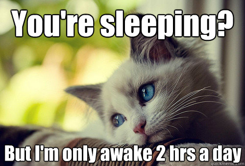 You're sleeping? But I'm only awake 2 hrs a day - You're sleeping? But I'm only awake 2 hrs a day  First World Cat Problems