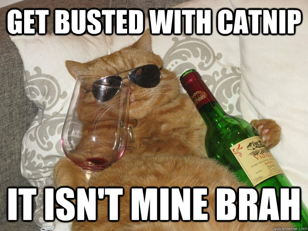 get busted with catnip it isn't mine brah