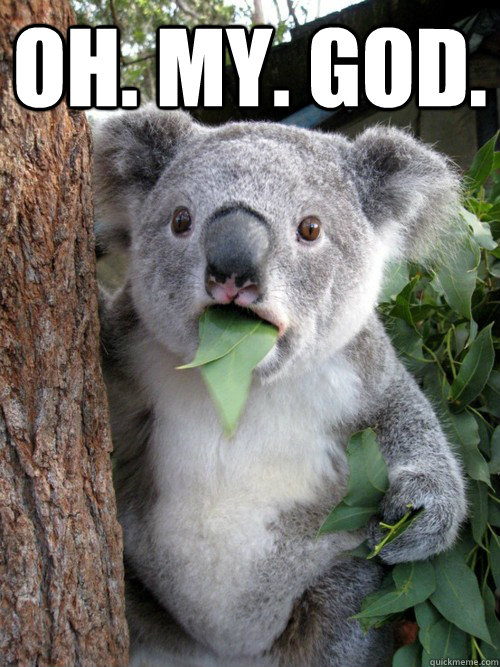 Oh. My. God.   Surprised Koala