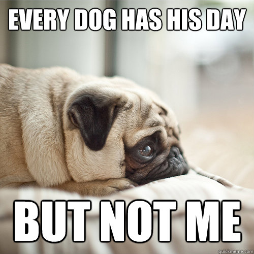 every dog has his day but not me