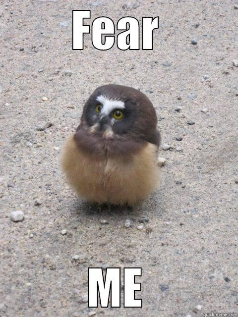 best friend photo caption ideas facebook - Derpy Owl quickmeme
