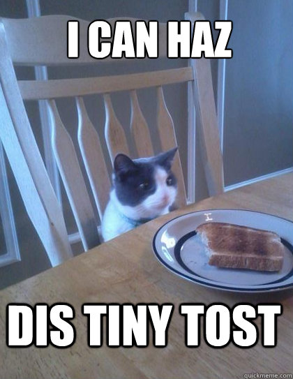 I can haz Dis tiny tost - I can haz Dis tiny tost  Breakfast Cat