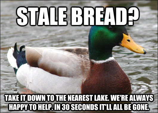 Stale bread? take it down to the nearest lake. We're always happy to help. In 30 seconds it'll all be gone. - Stale bread? take it down to the nearest lake. We're always happy to help. In 30 seconds it'll all be gone.  Actual Advice Mallard