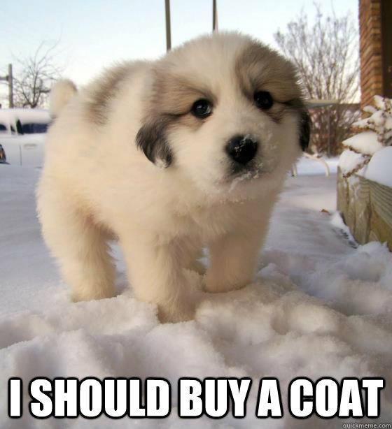 I should buy a coat -  I should buy a coat  Pessimistic Dog