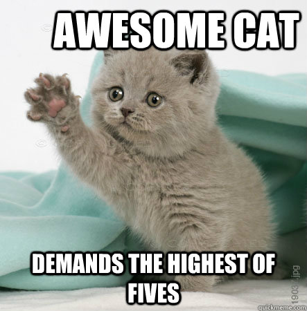 Awesome cat demands the highest of fives