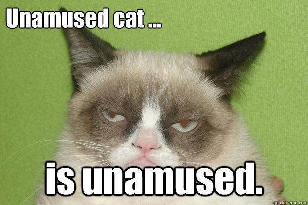 Unamused cat ... is unamused. - Unamused cat ... is unamused.  Misc
