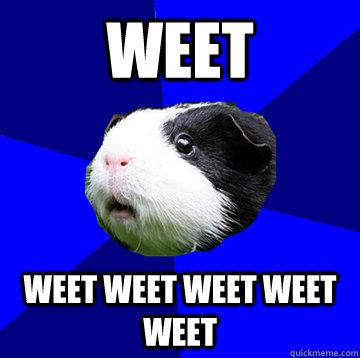 WEET weet weet weet weet weet - WEET weet weet weet weet weet  Jumpy Guinea Pig