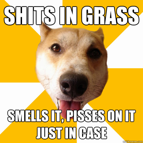 shits in grass smells it, pisses on it just in case  Territorial Shiba Inu