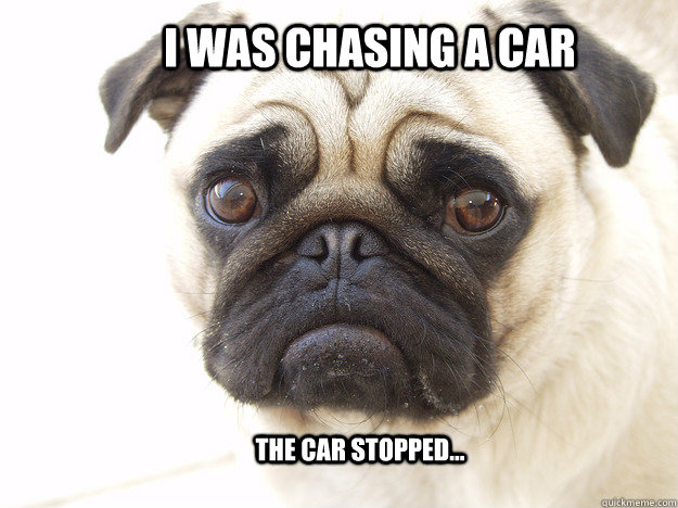 I was chasing a car The car stopped...  sad pug