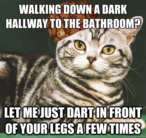 Walking down a dark hallway to the bathroom? let me just dart in front of your legs a few times