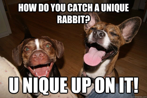How do you catch a unique rabbit? U nique up on it! - How do you catch a unique rabbit? U nique up on it!  Clean Joke Puppies
