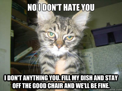 No I don't hate you I don't anything you. Fill my dish and stay off the good chair and we'll be fine.