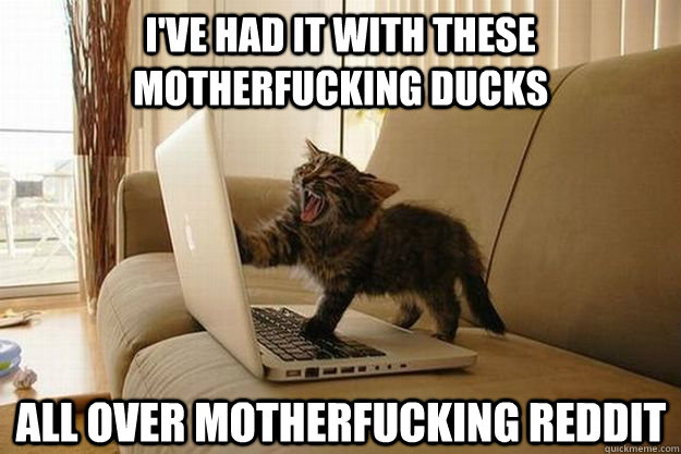I've had it with these motherfucking ducks All over motherfucking Reddit  Mad Cat