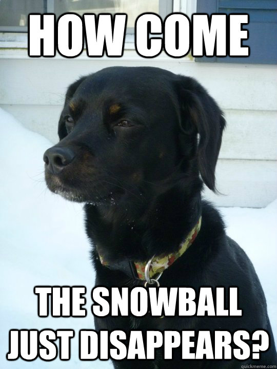 How come The snowball just disappears? - How come The snowball just disappears?  Philosophical Puppy