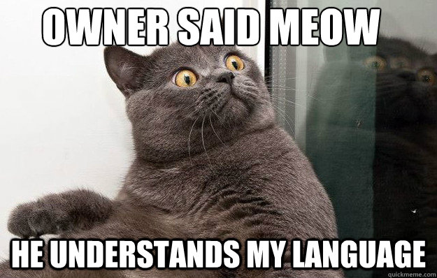 Owner said meow    He understands my language