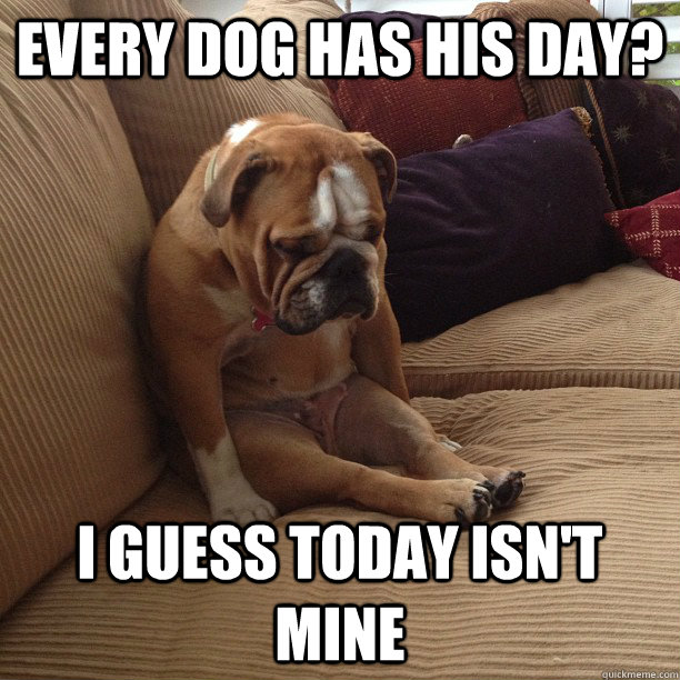 every dog has his day? i guess today isn't mine