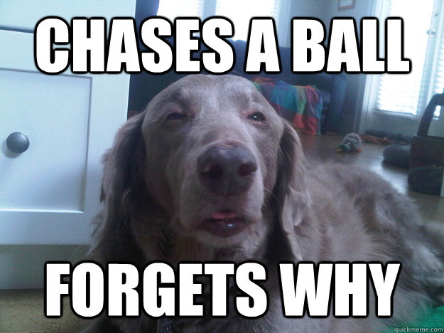 Chases a ball forgets why - Chases a ball forgets why  10 Dog