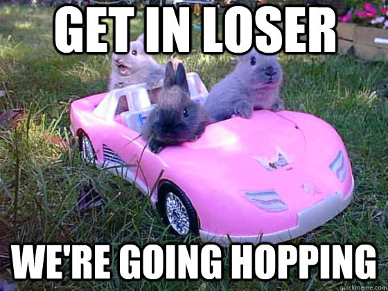 Get in loser we're going hopping - Get in loser we're going hopping  Bunnies in a Car