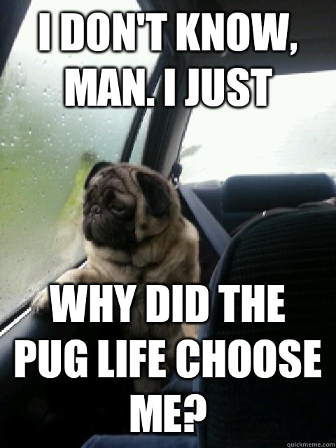 i don't know, man. i just why did the pug life choose me? - i don't know, man. i just why did the pug life choose me?  Introspective Pug