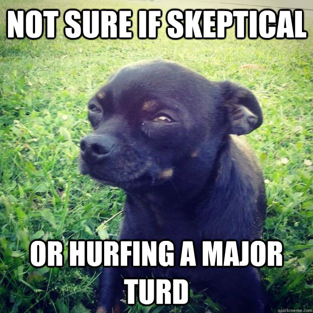 Not sure if skeptical Or hurfing a major turd - Not sure if skeptical Or hurfing a major turd  Skeptical Dog