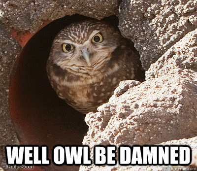 Well OWL be damned  Angry Owl