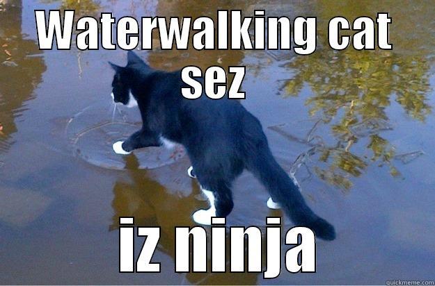 WATERWALKING CAT SEZ  IZ NINJA Jesus Cat