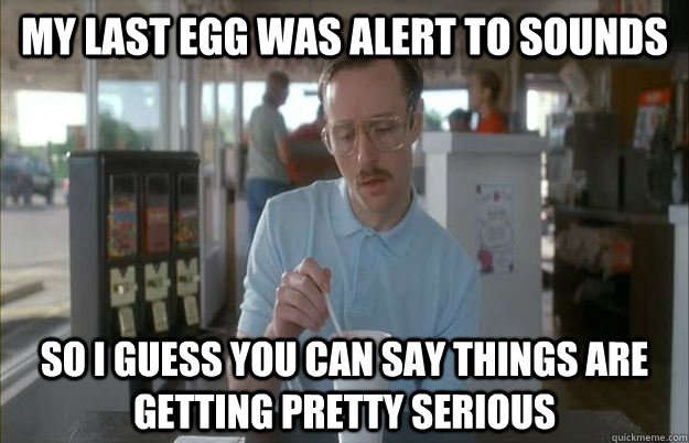My Last egg was alert to sounds So I guess you can say things are getting pretty serious - My Last egg was alert to sounds So I guess you can say things are getting pretty serious  Things are getting pretty serious