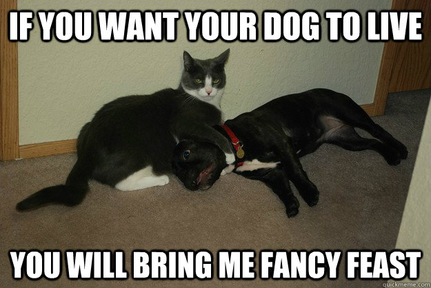 If you want your dog to live you will bring me fancy feast - If you want your dog to live you will bring me fancy feast  Misc
