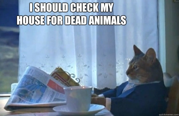 I should check my house for dead animals - I should check my house for dead animals  Sophisticated Cat