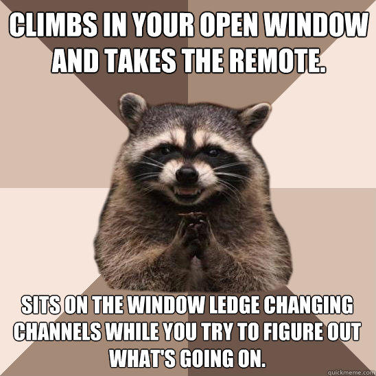 Climbs in your open window and takes the remote. Sits on the window ledge changing channels while you try to figure out what's going on. - Climbs in your open window and takes the remote. Sits on the window ledge changing channels while you try to figure out what's going on.  Evil Plotting Raccoon