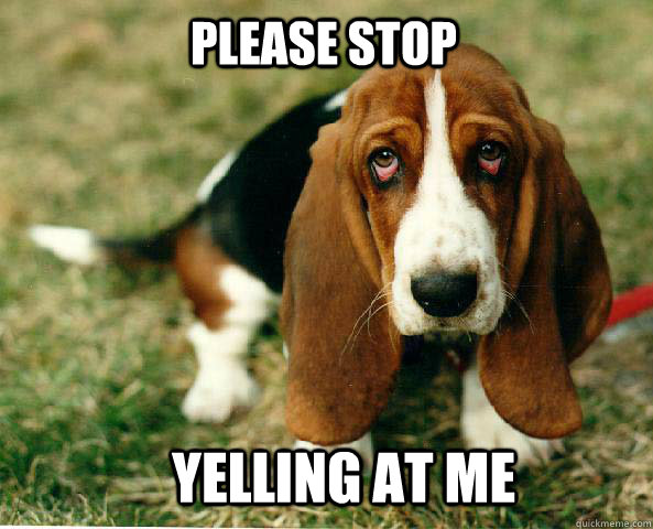 Please Stop Yelling at me  Basset Hound of guilt