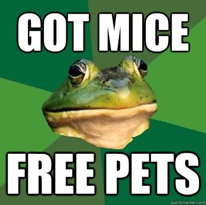 Got mice Free pets - Got mice Free pets  Foul Bachelor Frog