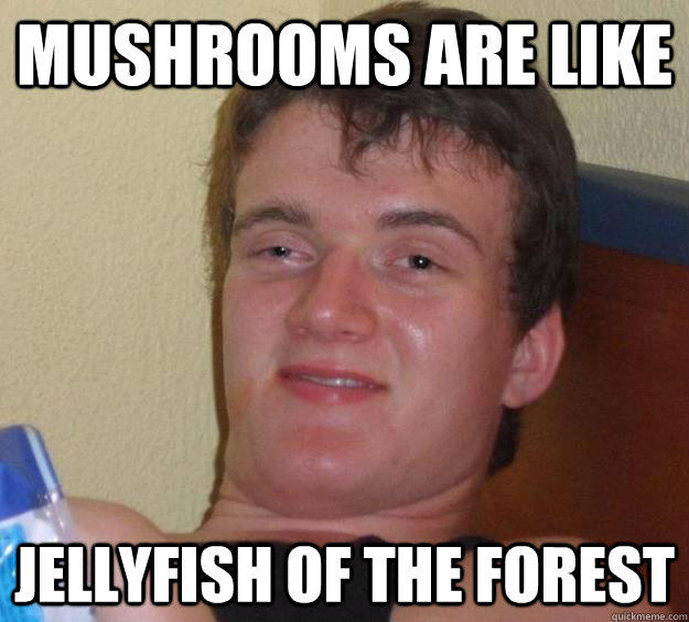 Mushrooms are like jellyfish of the forest - Mushrooms are like jellyfish of the forest  10 Guy