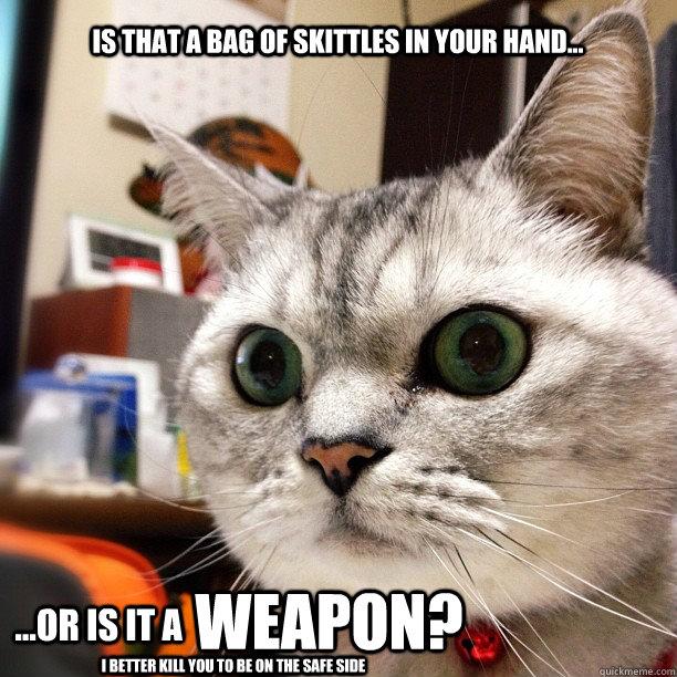 paranoid cat memes quickmeme