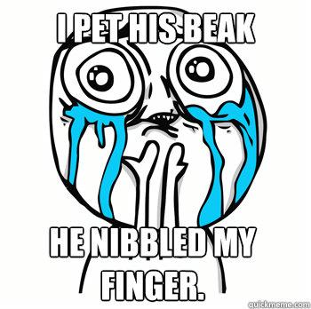 I pet his beak he nibbled my finger.  Cuteness overload