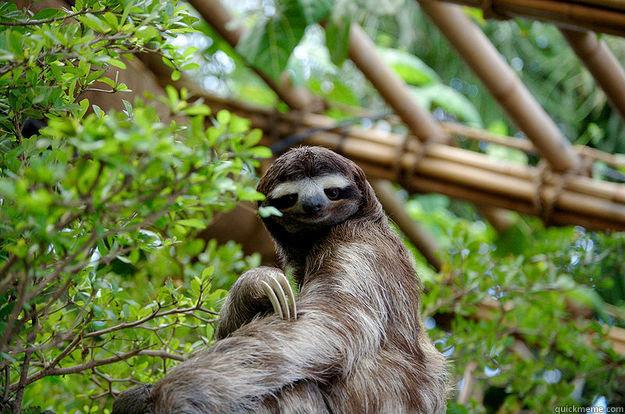 Seductive Sloth
