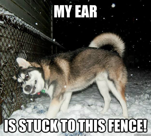 My ear is stuck to this fence!