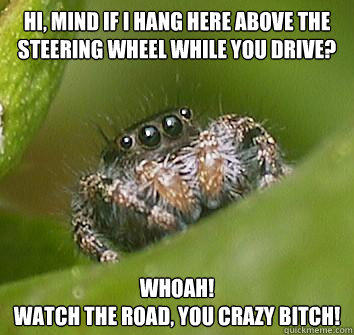 Hi, mind if i hang here above the steering wheel while you drive? Whoah! watch the road, you crazy bitch! - Hi, mind if i hang here above the steering wheel while you drive? Whoah! watch the road, you crazy bitch!  Misunderstood Spider