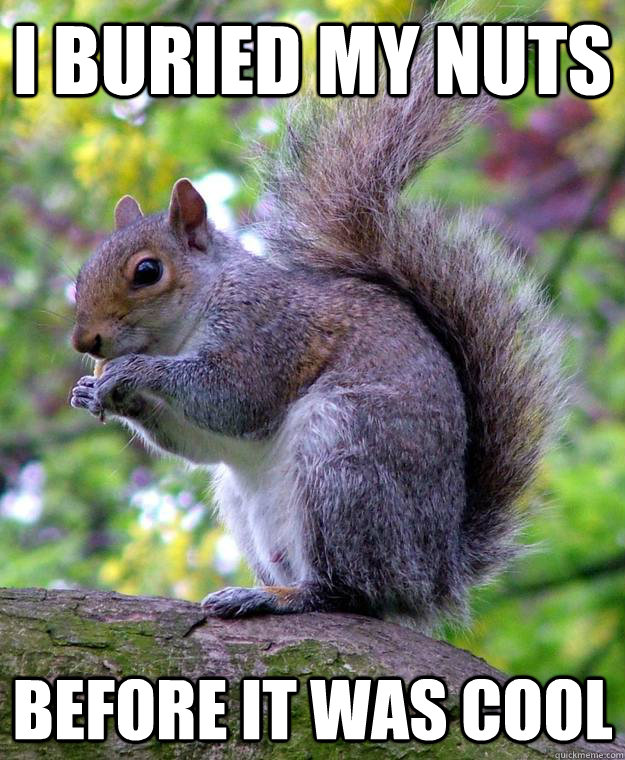 hipster squirrel memes
