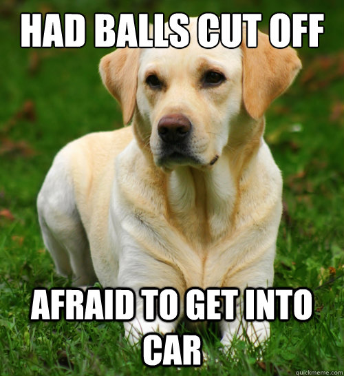 had balls cut off afraid to get into car - had balls cut off afraid to get into car  Dog Logic