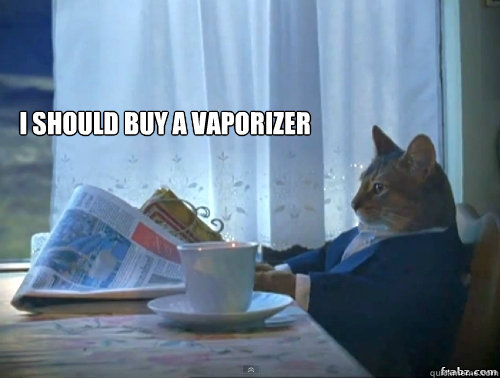 I should buy a vaporizer  - I should buy a vaporizer   Contemplative Breakfast Cat