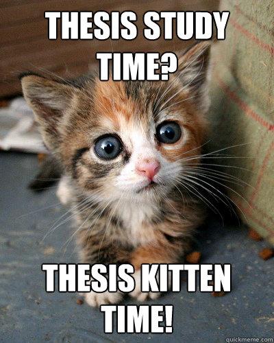 Thesis Study time? Thesis kitten time!  Thesis Kitten