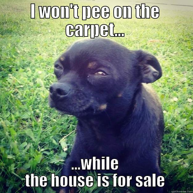 I WON'T PEE ON THE CARPET... ...WHILE THE HOUSE IS FOR SALE Skeptical Dog