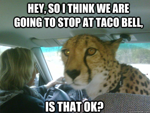 Hey, so I think we are going to stop at taco bell, Is that ok? - Hey, so I think we are going to stop at taco bell, Is that ok?  Chill Cheetah