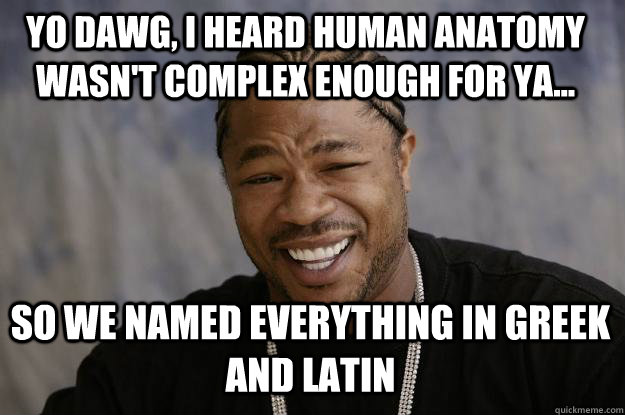Yo Dawg, I heard Human Anatomy Wasn't Complex Enough for ya... So we named everything in greek and latin  Xzibit meme