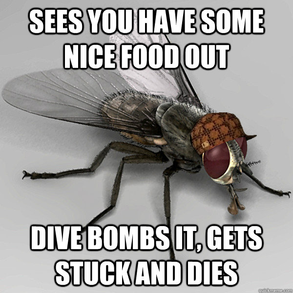 sees you have some nice food out dive bombs it, gets stuck and dies - sees you have some nice food out dive bombs it, gets stuck and dies  Scumbag Fly