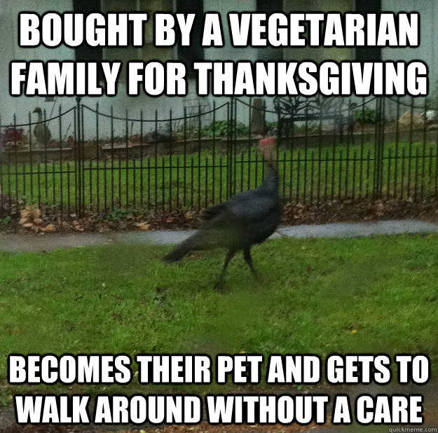 Bought by a vegetarian family for thanksgiving becomes their pet and gets to walk around without a care  Town Turkey