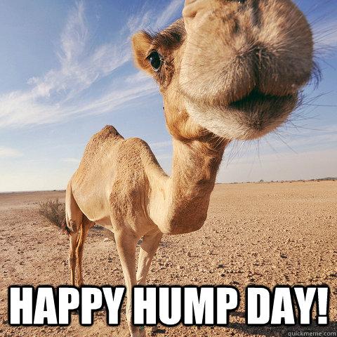 happy hump day!  hump day